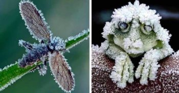 5 animale rezistente la frig, care sfidează moartea la temperaturi extreme