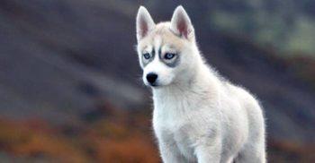 Aceștia sunt cei mai inteligenți câini, potrivit unui psiholog canin featured_compressed