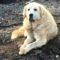Câinele care și-a așteptat stăpâna o lună lângă casa arsă FEATURED_compressed