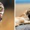 Cele mai frumoase imagini din 2018 - Premiile National Geographic featured_compressed