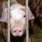 Danemarca va trimite emigranții pe o insulă unde trăiesc animale bolnave featured_compressed