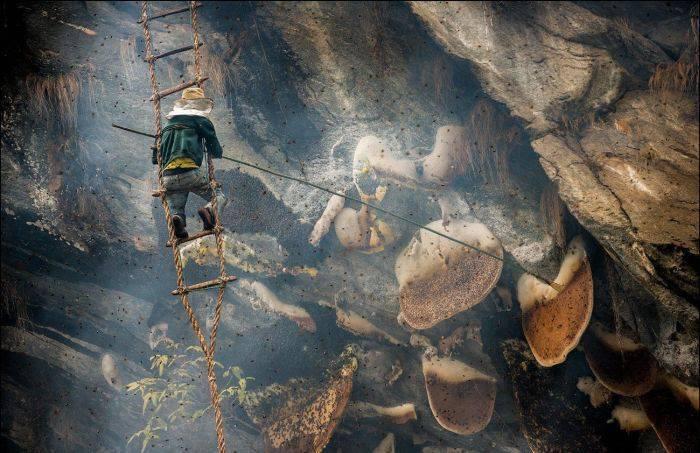 Mierea halucinogenă de Himalaya