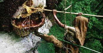 Mierea halucinogenă de Himalaya: Deliciul pentru care nepalezii își pun viața în pericol