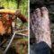 Pirații oaselor din Siberia - Traficanții de colți de mamut featured_compr