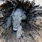 Stuckie, câinele mumificat care a a stat într-un copac timp de 50 de ani featured_compressed