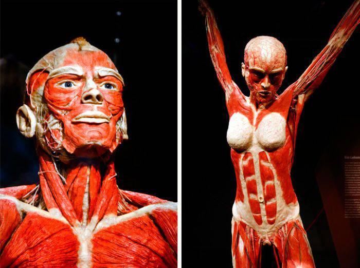 curiozități despre corpul uman