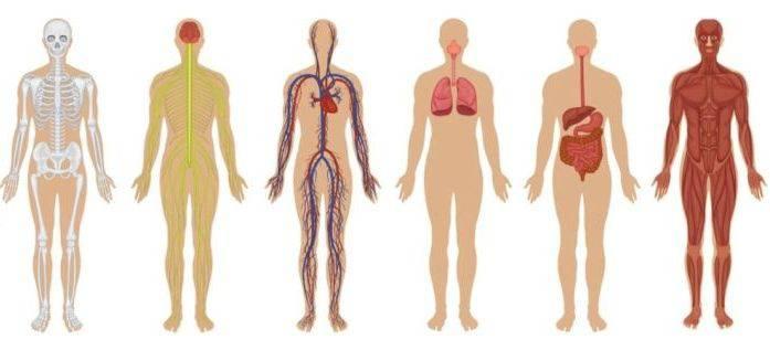 lucruri interesante despre corpul uman_redimensionat_comp