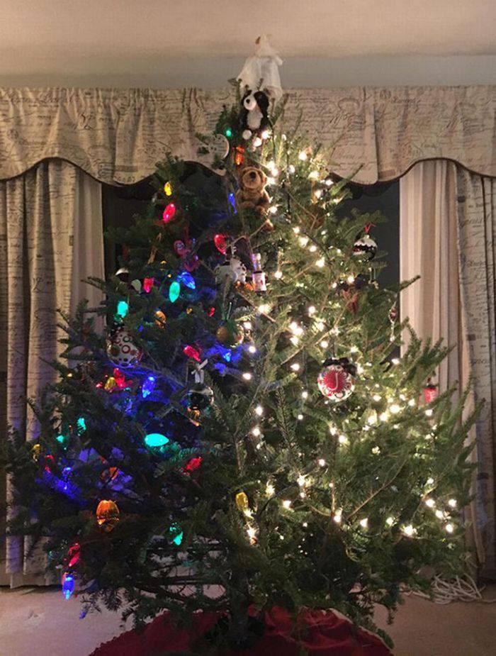 pomi de crăciun
