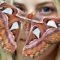 10 curiozități despre fluturi, insectele cele mai pline de culoare FEATURED_compressed