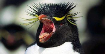 5 curiozități despre pinguini, cele mai bizare păsări de pe Terra