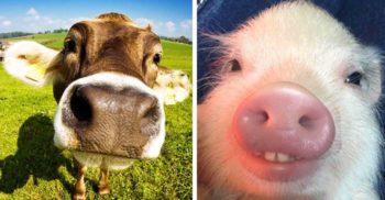 5 lucruri neașteptate descoperite în ultimii ani despre animalele domestice featured_compressed