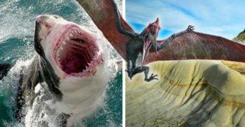 Ce caută un dinte de rechin în gâtul unui dinozaur zburător din Cretacic featured_compressed