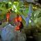 Cele mai mari cristale naturale de pe Pământ Peștera Naica, din Mexic FEATURED_compressed