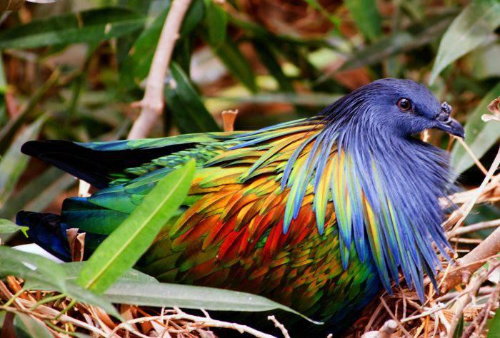 Curiozitati despre porumbei 04