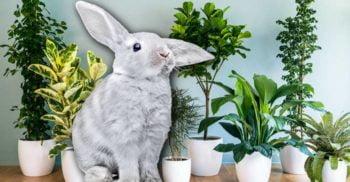 Planta cu ADN de iepure, ultima soluție pentru purificarea aerului