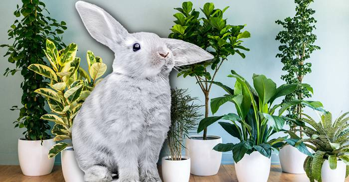 Planta cu ADN de iepure, ultima soluție pentru purificarea aerului featured_compressed