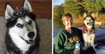 Sierra, câinele care a detectat cancerul stăpânei sale de trei ori
