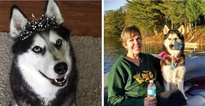 Sierra, câinele care a detectat cancerul stăpânei sale de trei ori featured_compressed