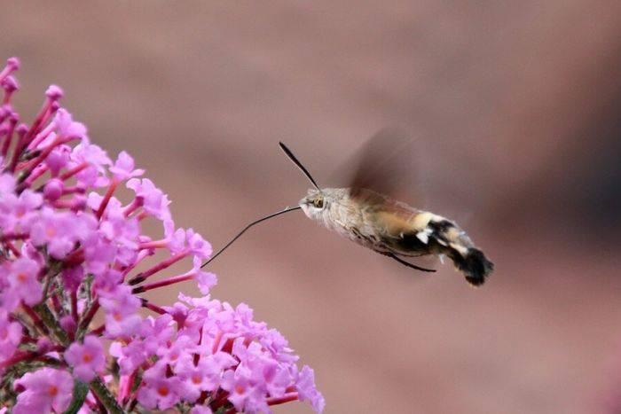 curiozități despre fluturi