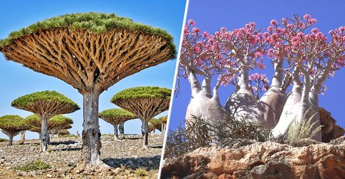 10 cei mai frumosi copaci din lume featured_compressed