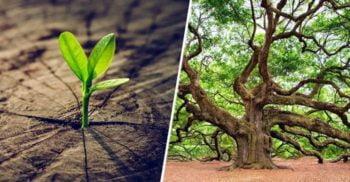 Cladoxilopsizii, primii copaci de pe Pământ, nu aveau inele