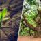 Cladoxilopsizii, primii copaci de pe Pământ, nu aveau inele featured_compressed