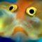 Peștele care se îmbată pentru a trece peste lunile grele de iarnă featured_compressed
