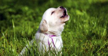 """Primarul unei comune din Franța a interzis """"lătratul excesiv"""" al câinilor"""