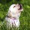 """Primarul unei comune din Franța a interzis """"lătratul excesiv"""" al câinilor featured_compressed"""
