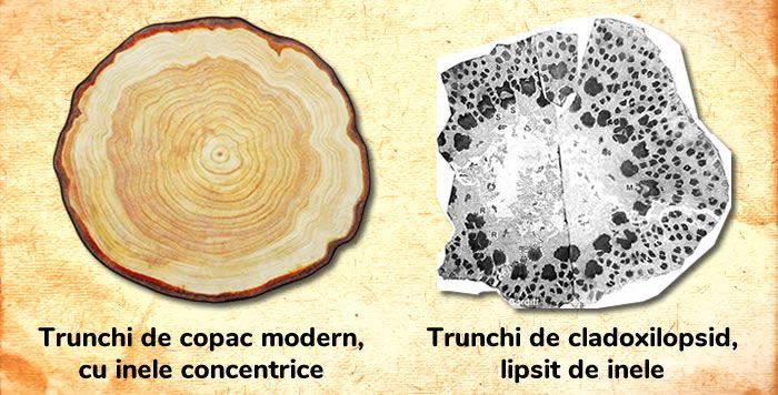 primii copaci de pe Pământ
