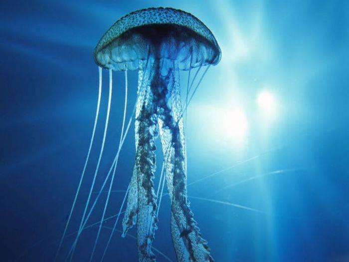 curiozități despre oceane