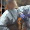 Într-un test sinistru, 36 de câini Beagle au fost obligați să înghită pesticide până când au murit featured_comp