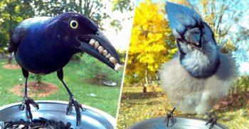 15 fotografii spectaculoase din viața secretă a păsărilor
