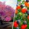 Acest pom face 40 de soiuri de fructe diferite featured_compressed