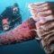 """Cea mai mare meduză din lume și alte patru """"jeleuri vii"""" gigantice FEATURED_compressed"""