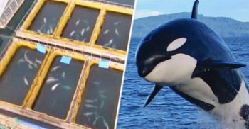 """Cea mai mare """"închisoare pentru balene"""" de pe planetă, descoperită cu drona în Rusia"""