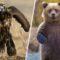 Forța brută Cele mai puternice animale de pe planetă FEATURED_comp