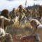 Noile descoperiri arată ce mâncau oamenii din zona noastră acum 8.000 de ani featured_compressed