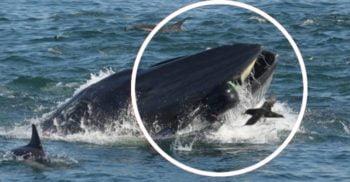 """<mark>VIDEO</mark> O balenă a încercat să """"înghită"""" un ghid turistic sud-african"""