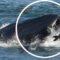 """O balenă a încercat să """"înghită"""" un ghid turistic sud-african featured_compressed"""