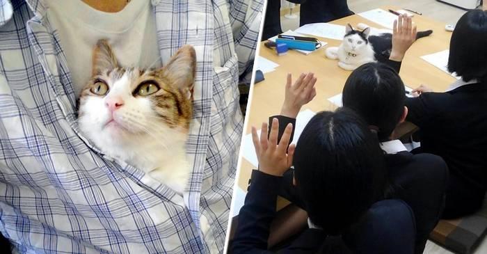 O companie japoneză a adoptat pisici pentru a reduce stresul angajaților. Rezultatele sunt excelente! featured_compressed