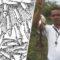 """Ploaia de pești din Honduras """"Pomana"""" care pică din cer în fiecare an featured_compressed"""