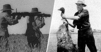 Războiul emu Conflictul ridicol în care păsările au învins oamenii featured_compressed