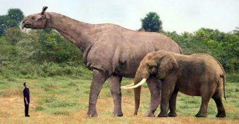 Ultimii titani de pe Pământ 5 animale preistorice uriașe featured_compressed