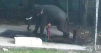 Un indian a fost strivit de un elefant pe care l-a lovit cu bâta pentru a-l forța să se așeze