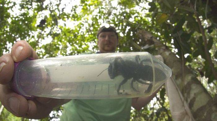 Cea mai mare albină