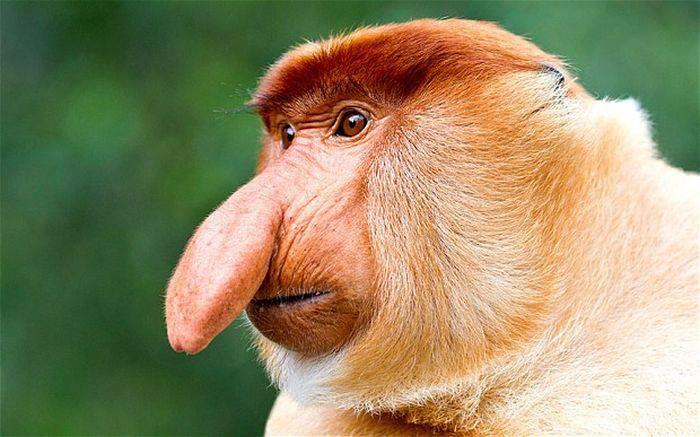 cele mai ciudate animale