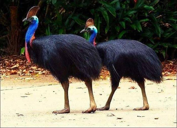 Cele mai periculoase păsări