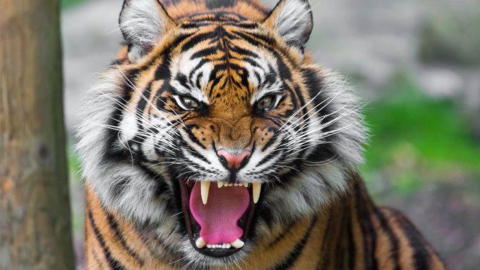Cele mai puternice animale