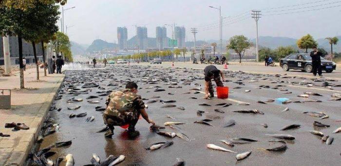 Ploaia de pești